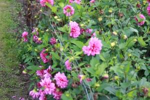 geviginer blomster 2013 004